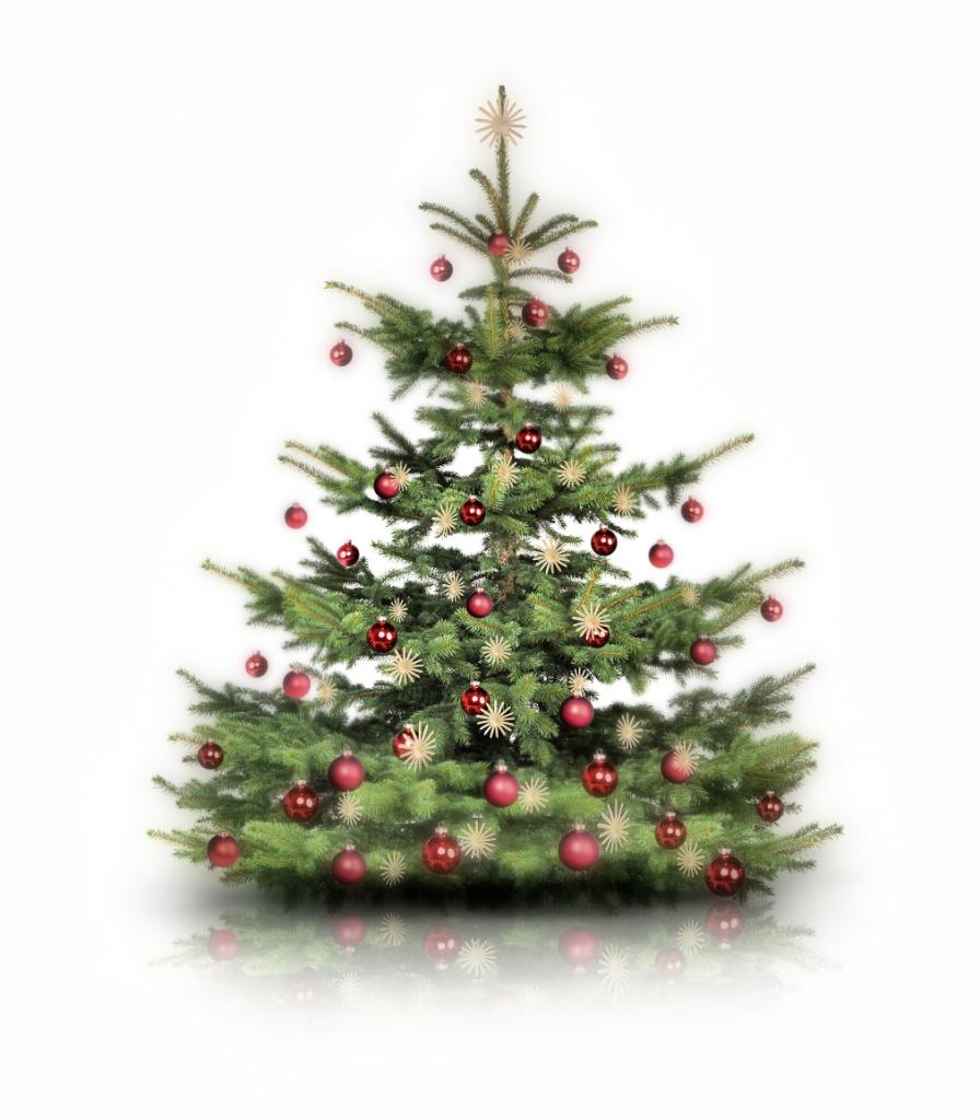 Cómo cuidamos nuestro árbol natural de navidad.