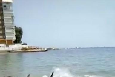 Pez Espada en la Playa de La Albufereta
